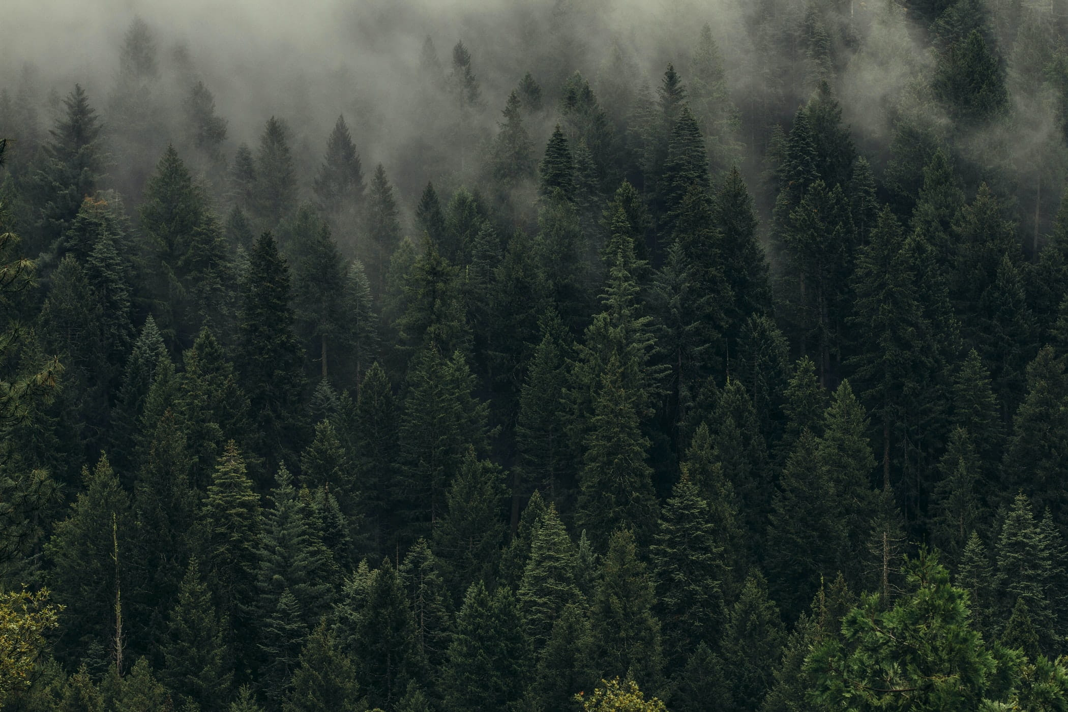 Why iProspect is planting 2.5million trees on Earth Day 2020