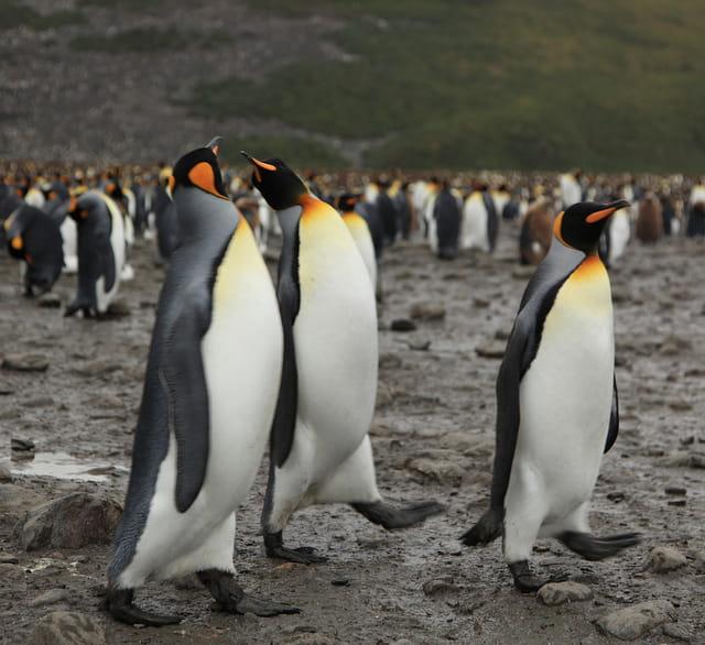penguin seo update